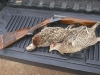 21 ga. SxS with Pheasants