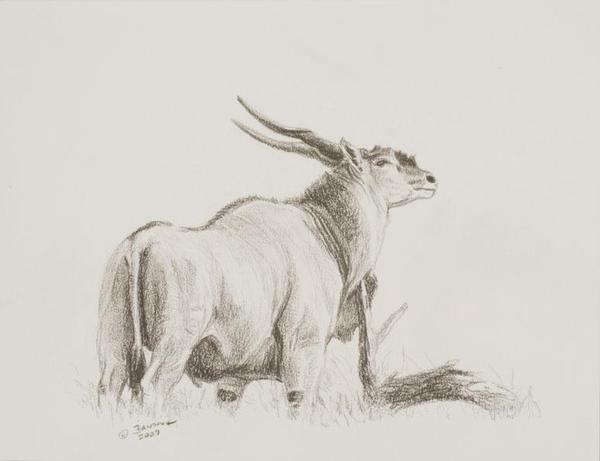 eland drawing